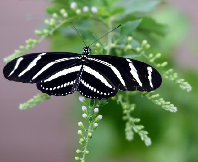 butterfly-15-1176510-639x523