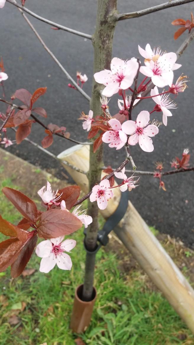 walk flower 1
