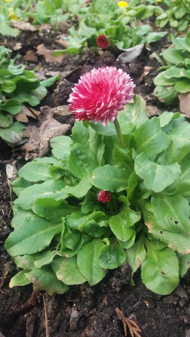 walk flower 2
